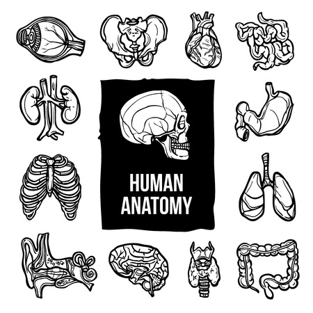 partes del cuerpo humano: Anatomía humana órganos internos del cuerpo iconos decorativos bosquejo conjunto aislado ilustración vectorial