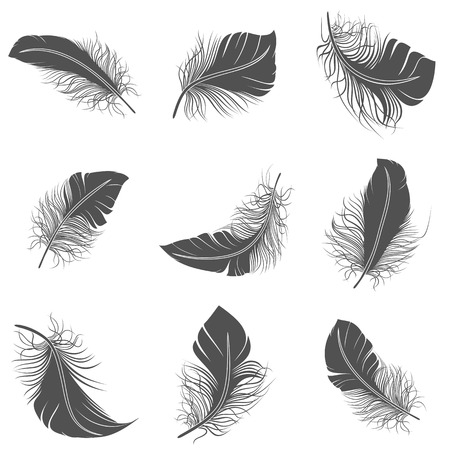 Bird feather black calligraphy literature allegory decorative icons set isolated vector illustration