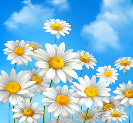 White daisy chamomile flowers on blue sunny summer sky background vector illustration