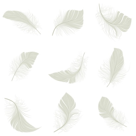 White bird wing feather decorative icons set isolated vector illustration