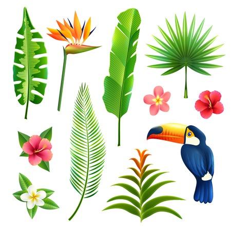 frutas tropicales: Jardines hojas y flores tropicales establecen con tuc�n aves aisladas ilustraci�n vectorial
