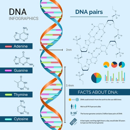 DNA scientific research infographics set with charts and diagrams vector illustration Vector