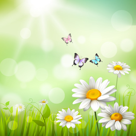 sunbeam background: Summer meadow background with white daisy flowers and butterflies vector illustration