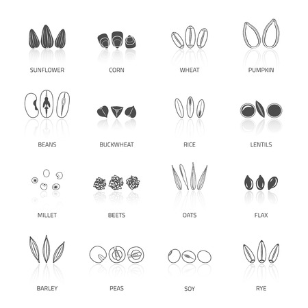Plant seed icon black set with beans buckwheat rice lentils isolated vector illustration