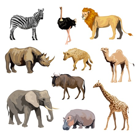 camelopard: Wild african animals set with zebra ostrich lion rhinoceros isolated vector illustration