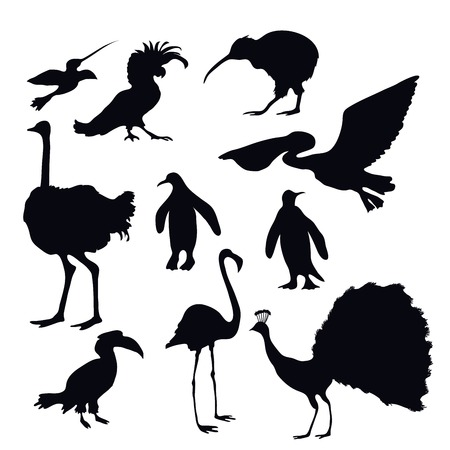 Pelican: Exotic birds silhouettes decorative icons set with flamingo peacock penguin isolated vector illustration