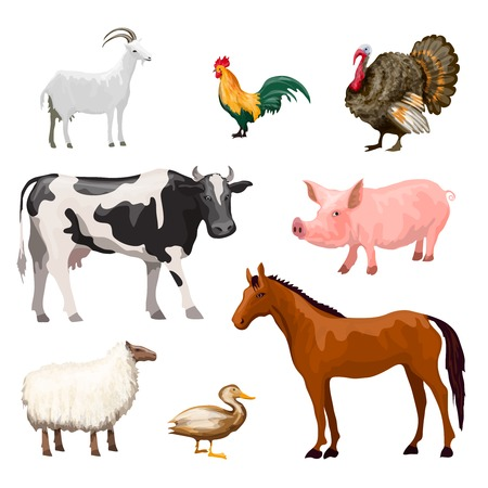 guinea: Farm animals decorative icons set with cow goose pig horse isolated vector illustration Illustration