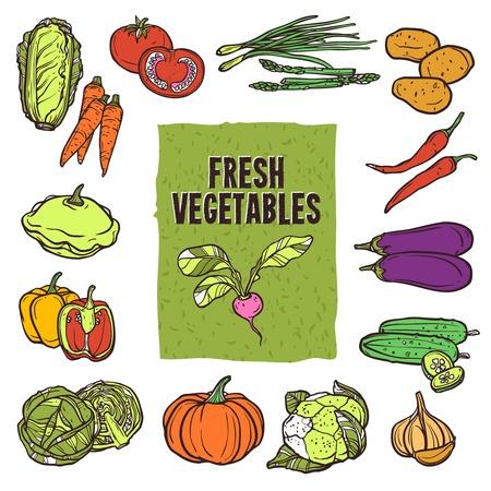 チャイブ: 野菜のスケッチ アイコンとカリフラワーのアスパラガスのキャベツとニンニク分離ベクトル イラスト