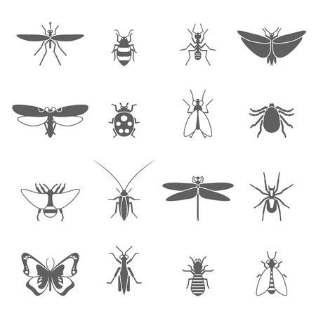 centipede: Insects black icons set with bee bug fly butterfly isolated vector illustration