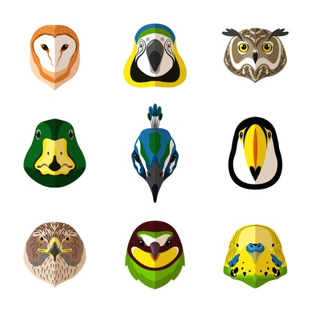 species living: Wild bird front portrait set with owl parrot toucan isolated vector illustration