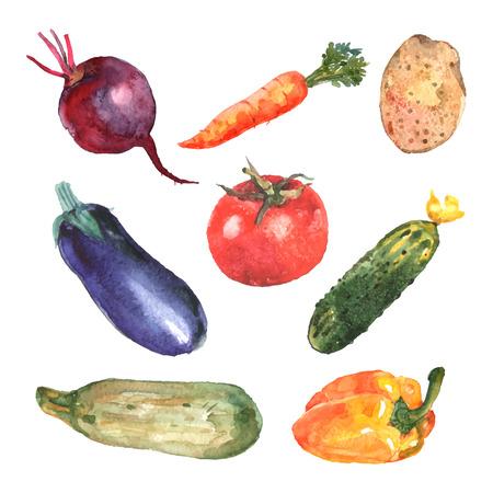 marchewka: Warzywa akwarelowe zestaw z ogórkiem buraków cukinia marchew ziemniak odizolowane ilustracji wektorowych