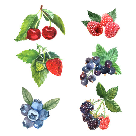 Watercolor berry set with cherry raspberry strawberry isolated vector illustration Vectores