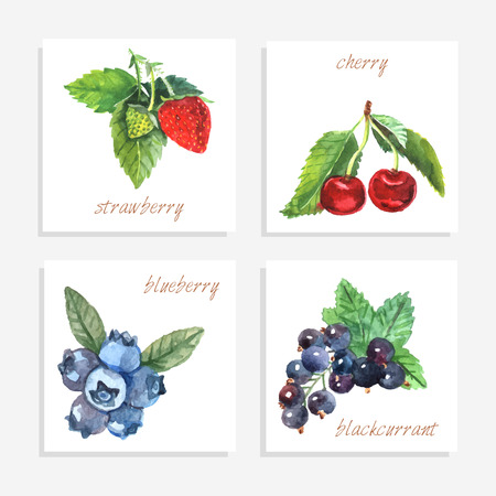 black berry: Berry paper cards with watercolor strawberry cherry blueberry and black currant isolated vector illustration