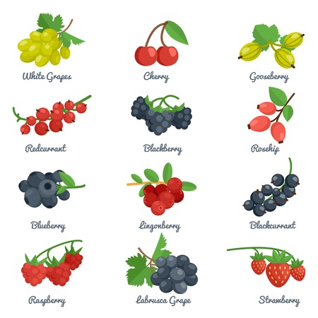 grosella: Bayas iconos planos establecen con blackberry aislado grosella uva cereza ilustración vectorial