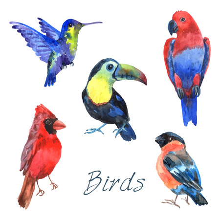animal fauna: Tropical rainforest parrot birds with beautiful plumage and curved beaks watercolor pictograms collection abstract isolated vector illustration Illustration