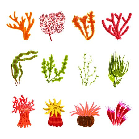 sea anemone: Underwater ocean and aquarium coral decorative icons set isolated vector illustration Illustration
