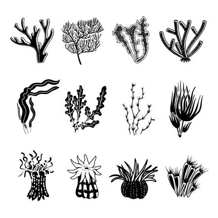 sea anemone: Tropical ocean coral black decorative icons set isolated vector illustration