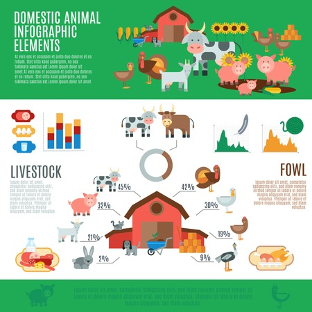 Domestic animals infographics set with livestock elements and charts vector illustration