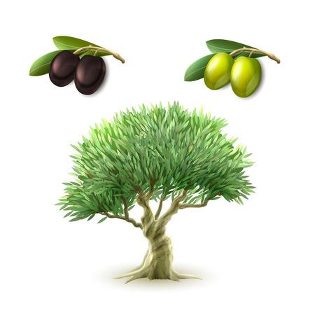 Ensemble de pictogrammes de produits primaires traditionnels de la production d?huile d?olive des olives vertes et noires abstraite isolée illustration Vecteurs