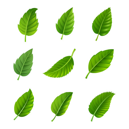 Various shapes and forms of green leaves set isolated vector illustration