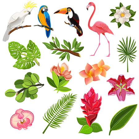 tropical bird: Exotic tropical leaves and parrots pictograms collection with orchids hibiscus and magnolia flowers buds abstract vector illustration