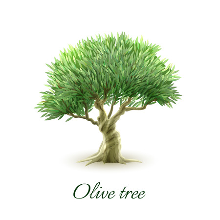 olive tree: Stylized picture of beautiful evergreen olive tree grown for fruit to produce oil poster abstract vector illustration