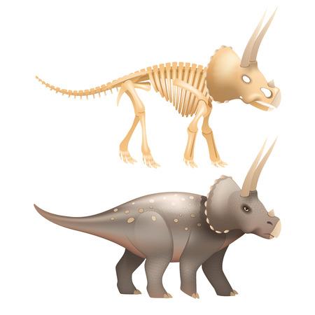 animal skeleton: Life triceratops dinosaur with skeleton in prehistoric times art isolated vector illustration