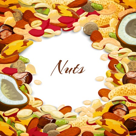 nutmeg: Nuts mix with coconut chestnut nutmeg peanut vector illustration Illustration
