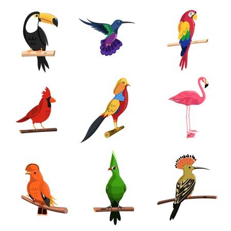 loros verdes: Aves ex�ticas establecidas con el loro tuc�n y el flamenco aislado ilustraci�n vectorial Vectores