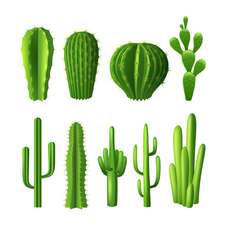 desert sun: Different types of cactus plants realistic decorative icons set isolated vector illustration