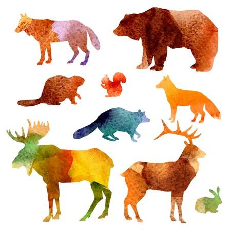 dieren: Aquarel bosdieren set met bever wasbeer vos en hazen geïsoleerde vector illustratie