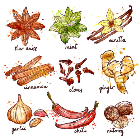 Herbs and spices decorative icons set with mint garlic cinnamon isolated vector illustration 일러스트