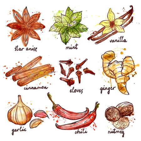 Kruiden en specerijen decoratieve pictogrammen die met geïsoleerd munt knoflook kaneel vector illustratie Stockfoto - 42622852