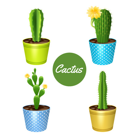 dry flowers: Cactus plants in flower pots decorative icons set isolated vector illustration