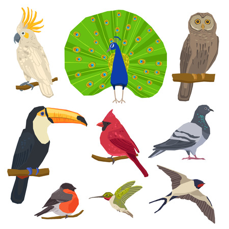 Birds peacock toucan bullfinch dove owl and swallow color painted flat icon set isolated vector illustration Illustration