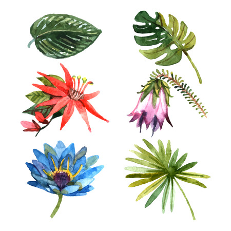 tropical garden: Exotic tropical rainforest botanic garden plants flowers and leaves pictograms collection watercolor sketch abstract isolated vector illustration Illustration