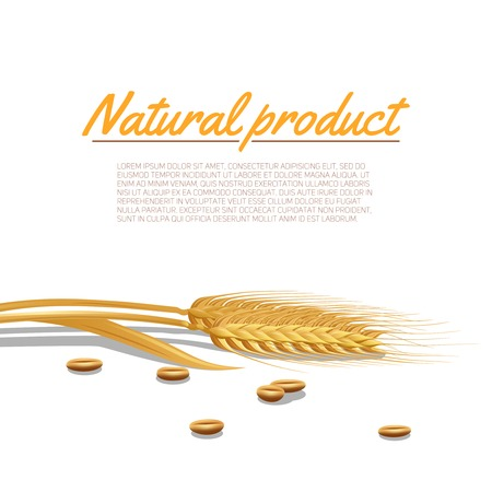cereals: Wheat ear with cereals and natural product text poster vector illustration
