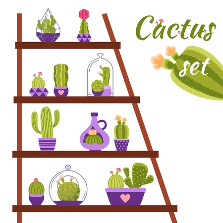 spiny: Home cactuses in pots on shelf decorative concept vector illustration Illustration