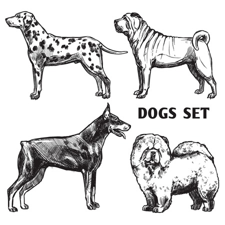 pointer emblem: Sketch dogs portrait set with dalmatian doberman shar-pei and chow chow profiles isolated vector illustration