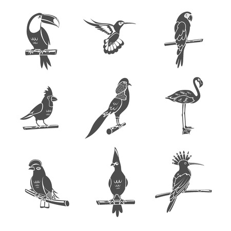 parrot flying: Tropical wild bird black silhouettes icons set isolated vector illustration