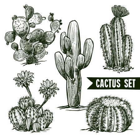 cactus flower: Different shapes desert and domestic cactus sketch set isolated vector illustration