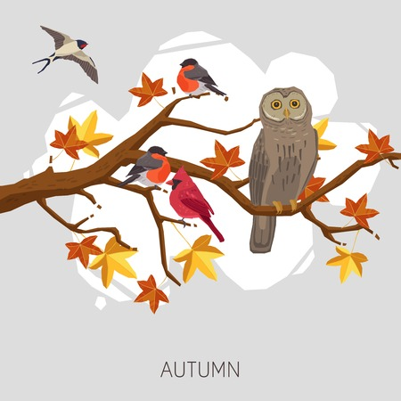 maple tree: Owl bullfinches and swallow on autumn maple tree branch vector illustration
