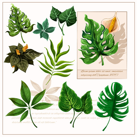 Exotic tropical rainforest plants opulent green leaves pictograms collection with watercolor sketch icon abstract isolated vector illustration Illustration