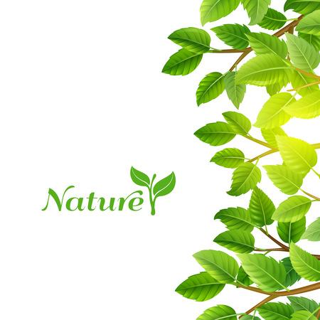feuille arbre: Nature éco planète sources d'énergie propres feuilles vertes des arbres branches écologique fond d'affiche abstraite illustration vectorielle Illustration