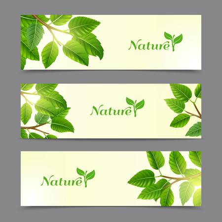 earth friendly: �rboles ramas con hojas verdes de la tierra los productos naturales org�nicos amigables banners horizontales aislados colecci�n abstracta ilustraci�n vectorial