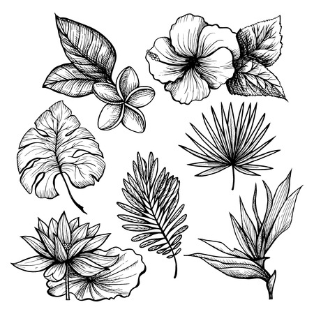 Black and white hand drawn tropical leaves and flowers set isolated vector illustration Illustration