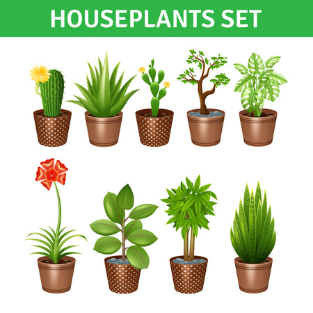 houseplants: Houseplants realistic icons set with cactus flowers and pots isolated vector illustration