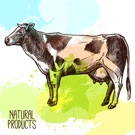 Schets binnenlandse koe staan met water kleur spatten op de achtergrond vector illustratie Stock Illustratie