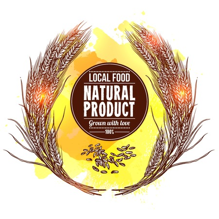 cereals: Natural wheat wreath with cereals   hand drawn vector illustration