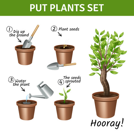 plant tree: Putting and growing plants instruction with pots water and seeds realistic icons set isolated vector illustration